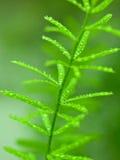 вода хворостины серии падений зеленая Стоковое Изображение