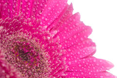 вода цветка падений Стоковые Изображения RF