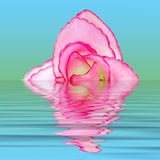 вода цветка ткани Стоковое Фото