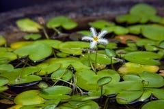 вода цветка стоковое изображение