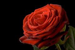 вода черных падений предпосылки красная розовая Стоковое Изображение