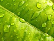 вода 02 листьев Стоковые Фотографии RF