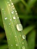 вода 11 листь падения Стоковая Фотография RF