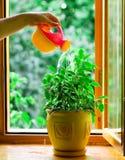 вода flowerpot цветка Стоковые Фото