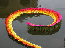 вода gerbera Стоковое Изображение RF