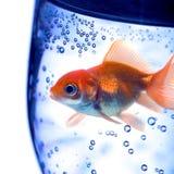 вода glas Стоковые Изображения RF