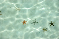 вода starfish Стоковые Изображения RF