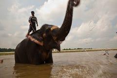 вода trumpets утехи слона ванны стоковые изображения rf