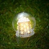 водить светильник травы стоковая фотография rf