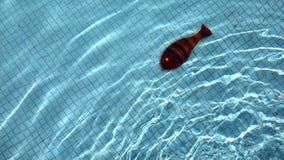 Водный бассейн и праздник видеоматериал