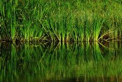 водоворот Стоковые Фото