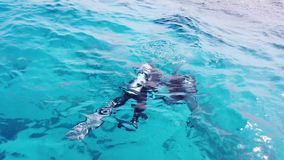 Водолазы в Красное Море сток-видео