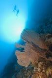 Водолазы скуба на тропическом рифе Стоковая Фотография