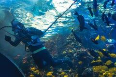 Водолаз акваланга в тропическом танке с тварями моря на аквариуме США Georgia с водолазами акваланга в танке Стоковое Фото