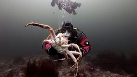 Водолаз играя с камчатскими крабами под водой на морском дне Камчатки сток-видео
