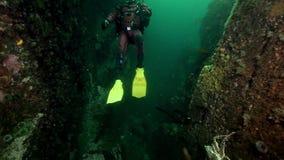 Водолаз и камчатские краби подводные на морском дне Камчатки видеоматериал