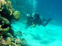 водолаз коралла Стоковая Фотография