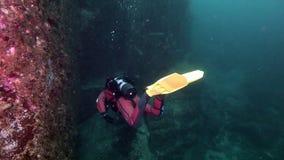 Водолаз подводный на морском дне Камчатки сток-видео