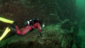 Водолаз подводный на морском дне Камчатки видеоматериал