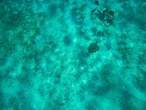 Водолаз принимая фото черепахи на дне карибского моря стоковая фотография