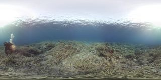 водолаз 360 vr плавает с черепахой на коралловом рифе сток-видео