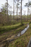 Водообильный след на парке штата заповедника заболоченного рукава реки Tarkiln в Perdido, Fl Стоковая Фотография RF