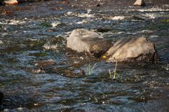 Водопады в лете Ясность и свежая вода падают вниз Подкраски зеленого, голубого и белого Серые камни внутрь Fotogr стоковые фотографии rf