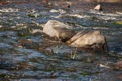 Водопады в лете Ясность и свежая вода падают вниз Подкраски зеленого, голубого и белого Серые камни внутрь Fotogr стоковое фото