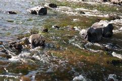 Водопады в лете Ясность и свежая вода падают вниз Подкраски зеленого, голубого и белого Серые камни внутрь Fotogr стоковое фото rf