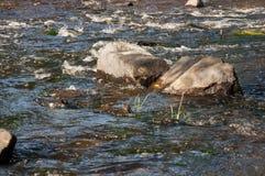 Водопады в лете Ясность и свежая вода падают вниз Подкраски зеленого, голубого и белого Серые камни внутрь Fotogr стоковое изображение
