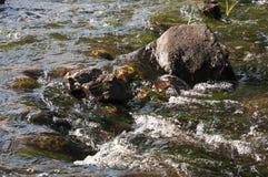 Водопады в лете Ясность и свежая вода падают вниз Подкраски зеленого, голубого и белого Серые камни внутрь Fotogr стоковые фото