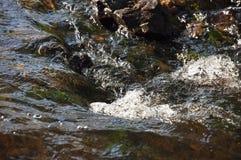 Водопады в лете Ясность и свежая вода падают вниз Подкраски зеленого, голубого и белого Серые камни внутрь Fotogr стоковая фотография