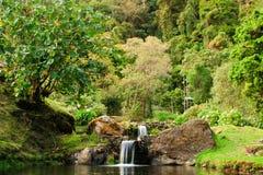 водопады джунглей Стоковая Фотография RF