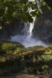 водопады пущи Стоковое Фото
