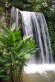 водопад ботанических садов Стоковая Фотография