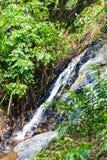 Водопад в глубоком лесе на реке горы в джунглях Стоковые Изображения