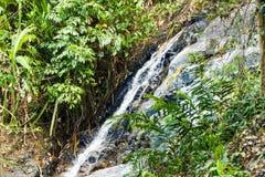 Водопад в глубоком ом-зелен лесе на реке горы в джунглях Стоковые Фото