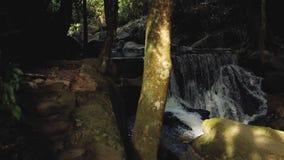 Водопад в джунглях на острове Таиланда сток-видео