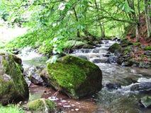 Водопад в зеленом лесе после дождя, Transsylvania, Румынии стоковое фото