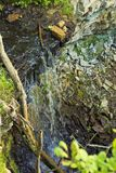 Водопад в зеленом лесе в Эстонии на Saka стоковая фотография