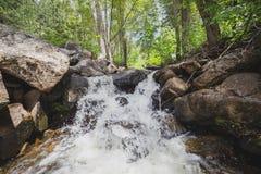 Водопад в зеленом районе леса стоковая фотография