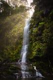 Водопад в лесе стоковые изображения rf