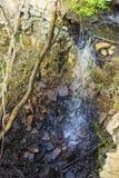 Водопад в лесе в Эстонии на Saka стоковое изображение