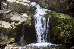 Водопад в прикарпатском лесе Стоковая Фотография