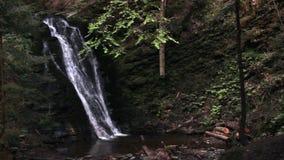Водопад в прикарпатском лесе акции видеоматериалы