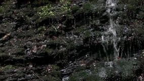 Водопад в прикарпатском лесе видеоматериал