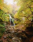 Водопад в пуще осени Стоковое Изображение RF