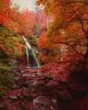 Водопад в пуще осени Стоковые Фото