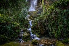 Водопад в сочное forrest Стоковые Изображения RF