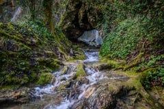 Водопад в сочном лесе Стоковые Фото